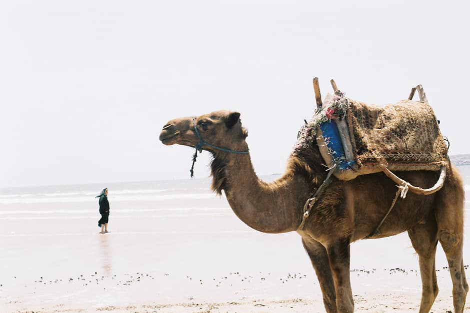 Camello y mujer en una playa de Essaouira, Marruecos